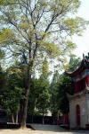 長安県にある。あたりは広々とした畑が続く、こ唐代(669年)の創建、高僧玄奘法師(三蔵法師)の遺骨を葬っている所として 、有名。赤茶色の土塀に囲まれた寺内には松・竹・梅・牡丹など植えられ また、日本佛教協会による記念碑は清楚に建立されていた。住人は全員で40名も此処で生活をしている、自給自足らしい。